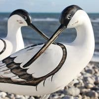 Hand Carved Wooden Avocet Preening | Hand Carved Birds | Bird Carving